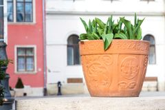 Flowerpot at Fő tér Main Square, Sopron, Hungary with symbols of the city. The caption says `Hungary royalty free stock images