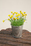 Flowerpot with flowers Stock Image