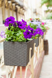 Flowerpot with flowers in cafe Royalty Free Stock Photo