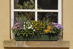 Flowerpot with flowers in Germany Stock Photography