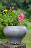 Flowerpot with flowers pansies in the yard. Royalty Free Stock Photo