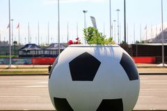 Flowerpot in the form of a soccerball. Big flowerpot in the form of soccerball royalty free stock images