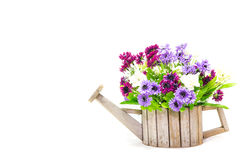 Flowerpot in form of watering can Royalty Free Stock Images