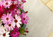 Flowerpot full of pink and magenta African daisies Royalty Free Stock Image