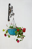 Flowerpot with geranium over wall Stock Images