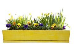 Flowerpot giallo con i daffodils fotografia stock libera da diritti