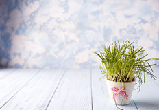 Flowerpot with a grass Royalty Free Stock Photography