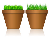 Flowerpot with grass Royalty Free Stock Photography