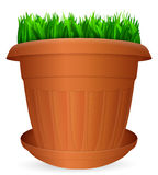Flowerpot grass Royalty Free Stock Image