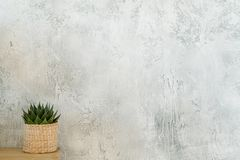 Flowerpot green succulent plant table gray wall. Flowerpot with green succulent plant on table against simple gray plaster wall royalty free stock photography