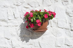 Flowerpot hanging on a wall. Royalty Free Stock Photos