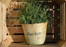 Flowerpot inside wooden box Royalty Free Stock Image