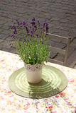 Flowerpot with lavender on table at street cafe Stock Photos