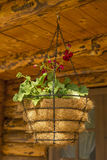 Flowerpot with lilies and violets Royalty Free Stock Photography