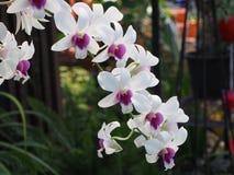 Flowerpot. In the Lung Jae garden stock photos