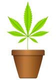 Flowerpot with marijuana leaf Royalty Free Stock Image