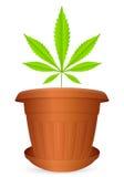 Flowerpot marijuana leaf Stock Photos