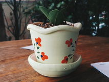 Flowerpot. This is mini Flowerpot Royalty Free Stock Photos
