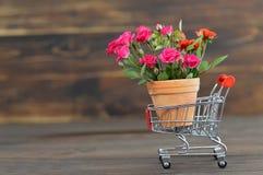 Flowerpot in a shopping cart. Flowerpot in a mini shopping cart stock photo