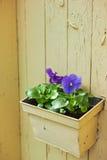 Flowerpot mit violetter Wanddekoration Stockfotos