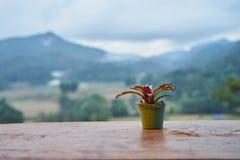 Flowerpot na stole widzieć widok naturę Fotografia Stock