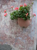 Flowerpot. On the old wall stock image