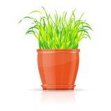 Flowerpot orange avec l'herbe verte illustration libre de droits