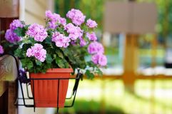 Flowerpot outdoor. Flowerpot with lilac flowers outdoor stock images