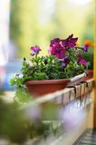 Flowerpot in outdoor cafe Royalty Free Stock Photos