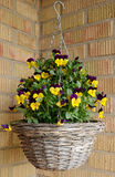 Flowerpot with pansies Royalty Free Stock Image