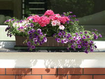 Flowerpot on parapet Royalty Free Stock Images