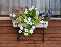 Flowerpot with petunia on the village window Stock Image