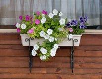 Flowerpot with petunia on the village window. Flowerpot with coloured petunia on the village window stock image