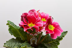 Flowerpot with pink and yellow flowers Stock Photos