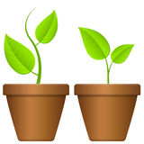 Flowerpot and plant Royalty Free Stock Images