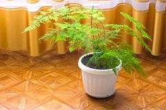 Plant in the house. Flowerpot royalty free stock images