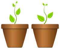 Flowerpot and plant Royalty Free Stock Image
