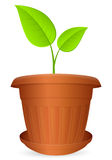 Flowerpot plant Royalty Free Stock Photos