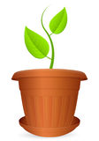 Flowerpot plant Royalty Free Stock Image