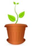 Flowerpot plant Stock Images