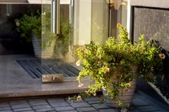 Flowerpot with plants at the entrance. Flowerpot with plants at the entrance to the building with a marble threshold and a glass door stock photos