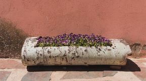 Flowerpot of purple pansies on a wooden trunk. With a salmon background behind stock image