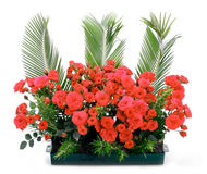 Flowerpot with red roses Royalty Free Stock Photo