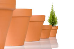 Flowerpot in a row Stock Images
