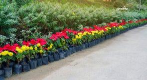 Flowerpot row Stock Image
