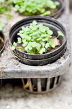 Flowerpot. Small plant in the flowerpot Royalty Free Stock Images