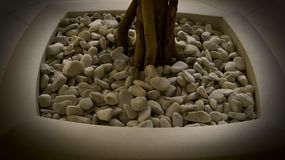 Flowerpot with small rocks and tree stock images