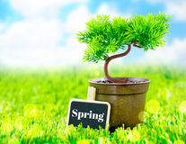 Flowerpot and spring word on blackboard on green grass with blue Stock Photos