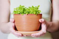 Flowerpot with sprouts Stock Image