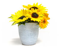 Flowerpot with sunflowers stock image